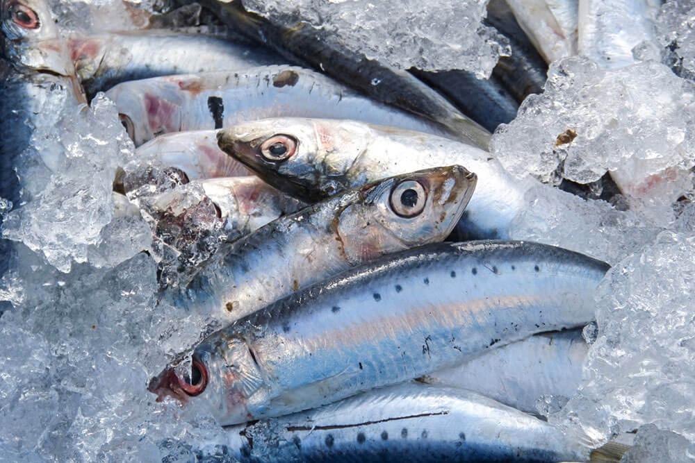 pesce-azzurro-come-riconoscerlo